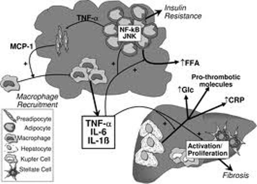 inflammation%20pathways%20larger.jpg